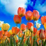Donner de la couleur à son jardin par les fleurs